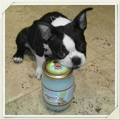 Coconut Oil For Dogs, Coconut Oil For Skin, Boston Terrier Love, Dog Teeth, Ticks, Fleas, Puppy Love, Puppies