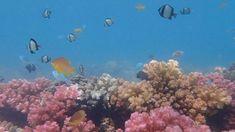 #GWAND #Sustainble #Festival #SDGs #CircularEconomy #CradletoCradle #GreenEconomy #ClimatChange #ClimatEmergency #Reefs #Coral #Save #IOceans #Innovations #3D #Printing