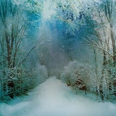 ...winter wonderland...