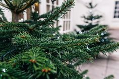 Since the Woburn Abbey wedding was taking place during the month of December, it was filled with such a cosy festive feel. Woburn Abbey, Manchester, Christmas Wreaths, Wedding Photography, Holiday Decor, Plants, Christmas Garlands, Wedding Shot, Holiday Burlap Wreath