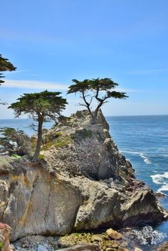 The Lone Cypress along California's iconic 17-Mile Drive. Click through for tourist information.