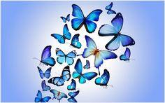 Blue Butterflies Wallpaper | blue butterflies wallpaper