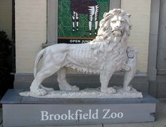 Brookfield Zoo, Chicago, IL - have fond memories of this lion, as a child and of my children - at the south gate!