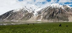 Suru Valley is located at 3000mts above sea level
