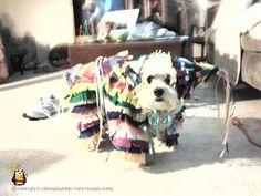 Mickey my dog in her Pinata Costume