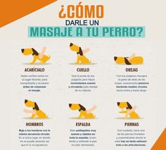 Como darle un masaje a tu mascota. #PetsWorldMagazine #RevistaDeMascotas #Panama #Mascotas #MascotasPanama #MascotasPty #PetsMagazine