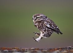 Landing with a certain amount of style... by Austin Thomas on 500px
