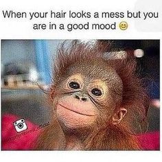15 Hilarious Monkey Memes To Brighten Your Day - Monkeys Funny - 15 Hilarious Monkey Memes To Brighten Your Day The post 15 Hilarious Monkey Memes To Brighten Your Day appeared first on Gag Dad. Funny Cute, The Funny, Hilarious, I Love To Laugh, Make Me Smile, Funny Animal Pictures, Funny Animals, Animal Funnies, Animal Memes