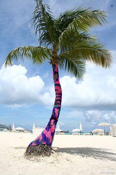 palm tree – olek strikes again