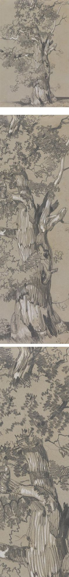 Eye Candy for Today: Edward Lear graphite drawing                                                                                                                                                                                 More