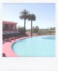 swim x palm