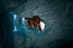 avalanche rescue dog by Dalia Fichmann on 500px