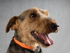 Adopt Traver, a lovely 8 years Dog available for adoption at Petango.com. Traver…