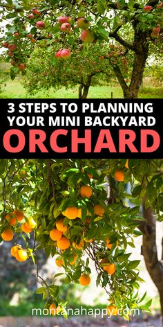 3 Steps on Planning Your Mini Backyard Orchard will show you how to start planning out your garden.  Designing your orchard is an important beginning for any homesteading garden. #backyardorchard #orcharddesign #orchardlayout #orchardgarden #orchardplanning
