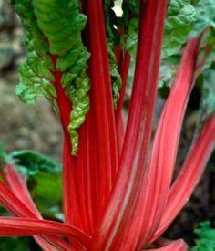 Milyen zöldségeket ültethettek árnyékos helyre? Innen megtudhatjátok!