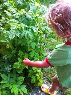 Kurz und gut - unsere Familiennotizen: Grünzeug:: im Garten Herbs, Nature, Ideas, Herb, Medicinal Plants