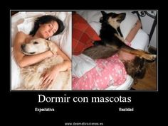 The reality of sleeping with pets Funny Dogs, Funny Animals, Cute Animals, I Love Dogs, Puppy Love, Memes Humor, Funny Memes, Pet Humor, Dramas