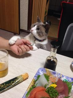 "* * "" Waitz - me wants to knowz whys meez wuzn'ts invited."""