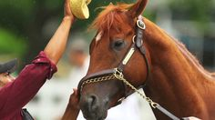2012 Triple Crown hopeful I'll Have Another retired. Will not run in Belmont Stakes due to injured tendon. CNN image.