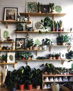 My newest UK retailer in Exeter @ngngdesign with some beautiful #shelfie action including my Species Prints! They just received their shipment so if you live close please go check out their selection and bonus you can also shop for plants.