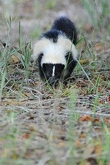 Getting sprayed by a skunk is no laughing matter! We explain how to remove the le pew from your dog or cat, and also from your home.
