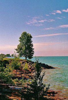 Sea & Tree