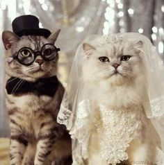 gatti sposi