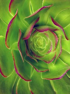 Sweet succulent #succulent #photography