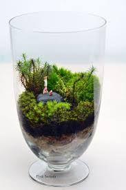 moss in a jar - Google Search