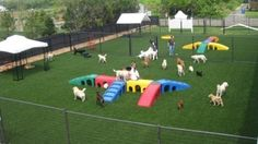 Doggie daycare.  Want this!!!!!!