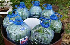 Cum să crească castraveți într-o sticlă Eco Garden, Balcony Garden, Garden Beds, Planting Vegetables, Growing Vegetables, Vegetable Garden, Farm Gardens, Outdoor Gardens, Different Fruits And Vegetables
