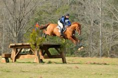 Cool jump: Horse sports, that would be so fun to try!