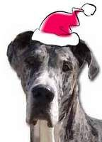 Our Letter to Santa 2012, From the homeless dogs at Rescue. (The Danes' Christmas List, WILLI MO pictured.) http://hhdane.org/howtohelp/ourlettertosanta_12.htm