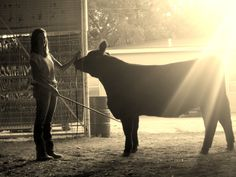 The love between a girl and her calf is inexpressible <3