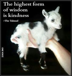 Kindness towards ALL beings