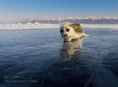 #animals Good bye! by AlexElBarto http://ift.tt/1PL0RLP