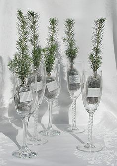 Eco friendly Wedding Favors
