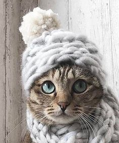 So darn cute! This comfy kitten will stay warm in the winter cold, especially now that Blizzard Stella has wreaked havoc.