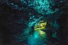 The Glow Worms in Waitomo Caves
