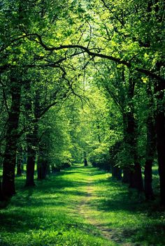 I believe that a place like this dwells within me. It is where I go in troubled times. Beautiful World, Beautiful Places, Landscape Photography, Nature Photography, Background For Photography, Imagen Natural, Tree Tunnel, Forest Path, Nature Scenes