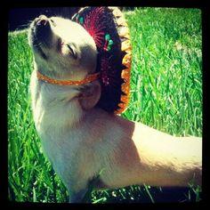 sombrero plus chihuahua= classic <3 it