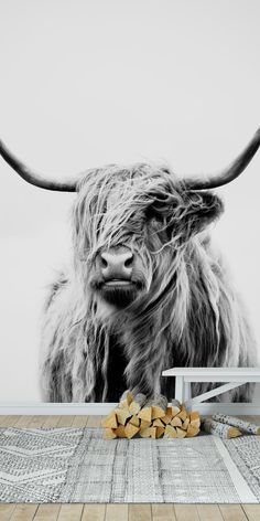 Portrait of a Highland Cow 2 Wallpaper Highland Cow Painting, Highland Cow Art, Scottish Highland Cow, Highland Cattle, Cow Wallpaper, Fluffy Cows, Cow Photos, Cute Cows, Animal Photography