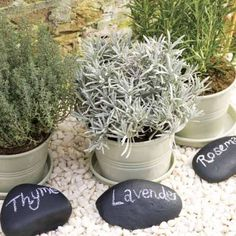 Craft rocks with labels would make great markers. Definitely going to do this. I already have the rocks. Posted on Shelterness.
