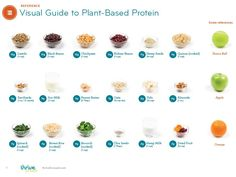 visual guide to plant based proteins and serving sizes