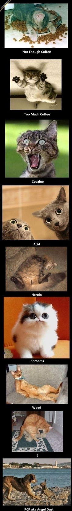 OMG , TO FUNNY !!Cats On Drugs | Click the link to view full image and description : )