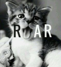 roar/meow