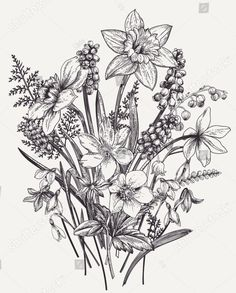 Find Bunch Early Spring Flowers Botanical Illustration stock images in HD and millions of other royalty-free stock photos, illustrations and vectors in the Shutterstock collection. Thousands of new, high-quality pictures added every day. Botanical Tattoo, Botanical Drawings, Botanical Art, Flor Tattoo, Daffodil Tattoo, Black And White Flowers, Yellow Roses, Pink Roses, Bouquet Tattoo