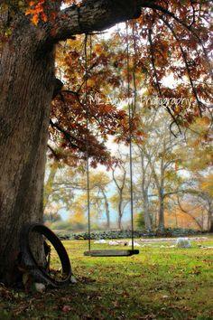 Tree Swing ~ #Photography