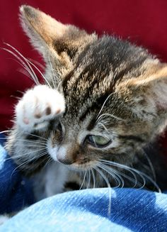 I Salute You by magannie, via Flickr