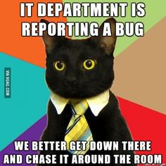 A Business Cat meme. Caption your own images or memes with our Meme Generator. Chemistry Cat, Funny Animal Pictures, Funny Images, Funny Animals, Funniest Animals, Hilarious Pictures, Funny Photos, Business Cat Meme, Crazy Cat Lady